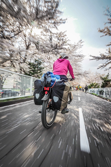 Shiroishi Cycling Road in full blossom mode, Sapporo, Japan