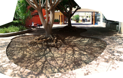 206 Universidad Iberoamericana - Breathing trees (After) | by Amorphica