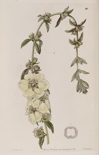 N178 w1150 edwards 39 s botanical register london james for Botanical tattoo london