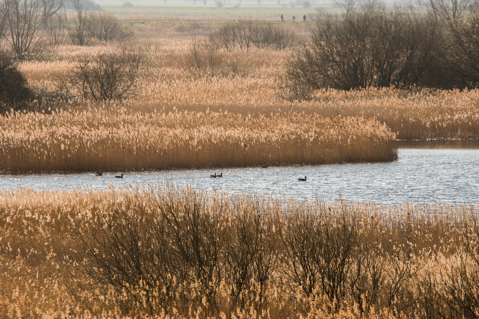 Wicken Fen - April 2016-9