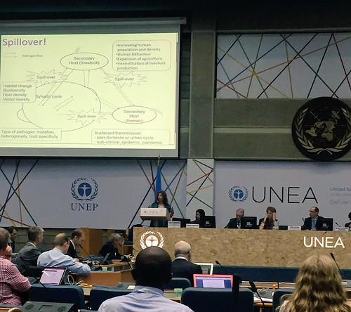 Delia Grace presents on zoonotic diseases, UNEP Nairobi, 20 May 2016