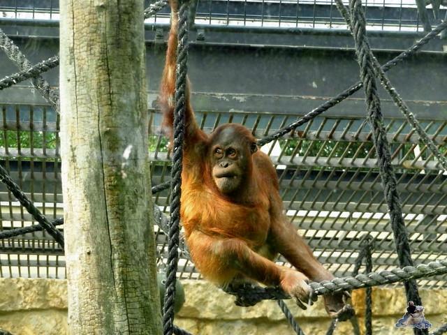 Zoo Berlin 27.05.2016   0105