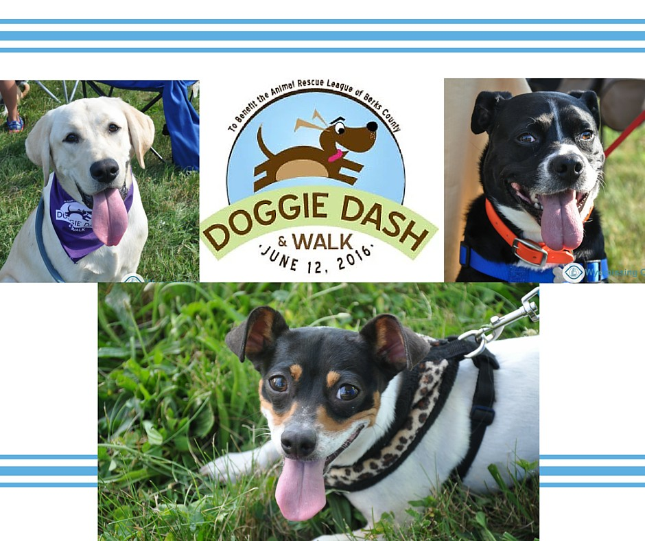 Doggie Walk 2016