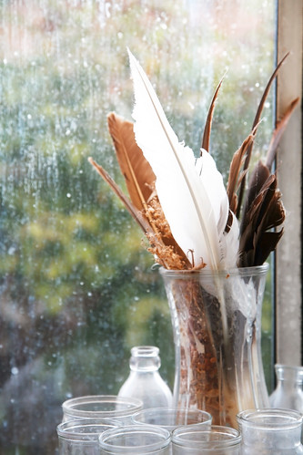 home life feathers kitchen window _MG_0023 | by ex.libris