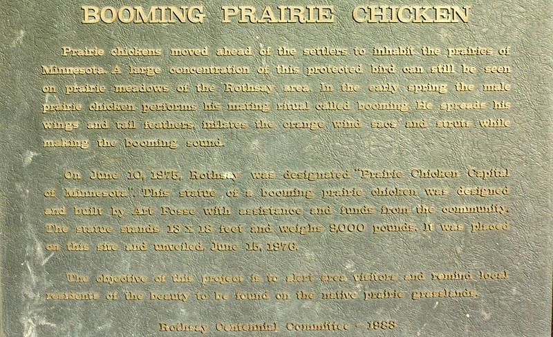 Booming Prairie Chicken, Rothsay, MN