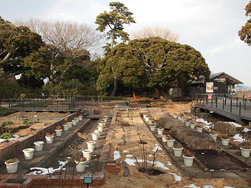 Samuel Cocking Garden @ Enoshima