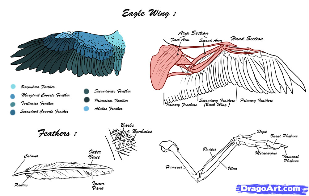 Eagle Wing Diagram - Auto Electrical Wiring Diagram •