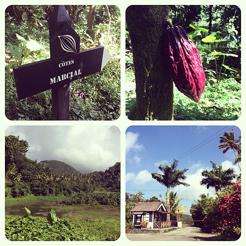 Hotel Chocolate cocoa fields in St Lucia | by Downtown Traveler