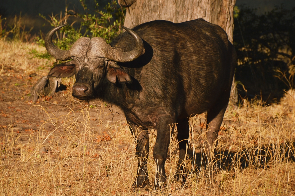 safari24