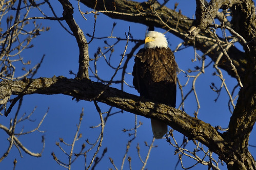 Bald Eagle Court Santa Rosa Beach Fl