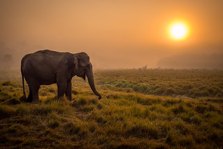 Elephant at sunrise | by josh t2013