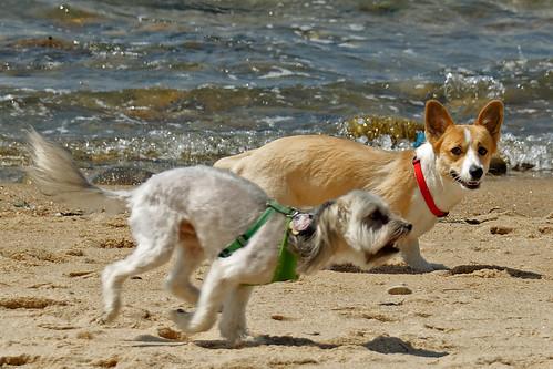 Dog Friendly Long Beach Island