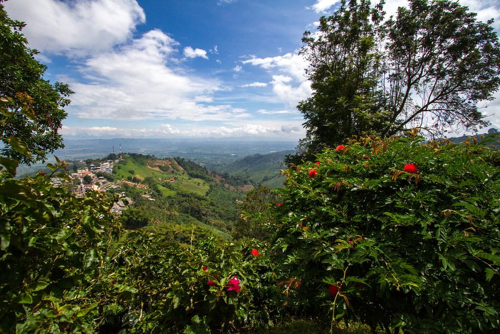 San Alberto coffee tour and tasting, Buenavista, Quindío