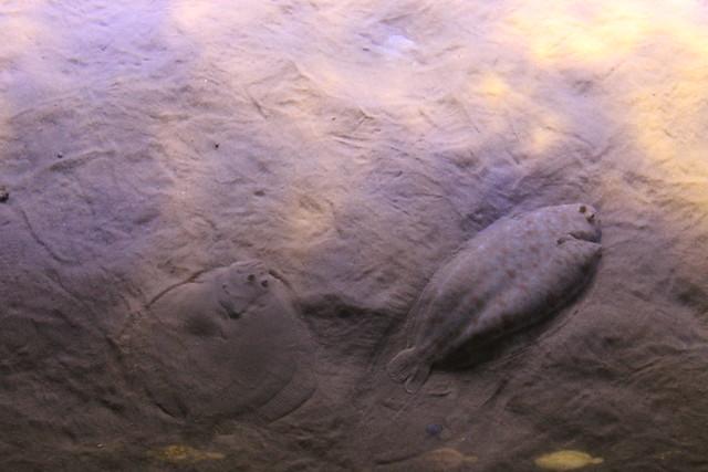 oceanario-lisboa14