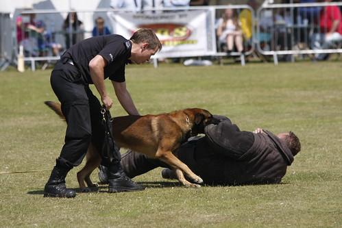 Bloodhound Dog Rescue