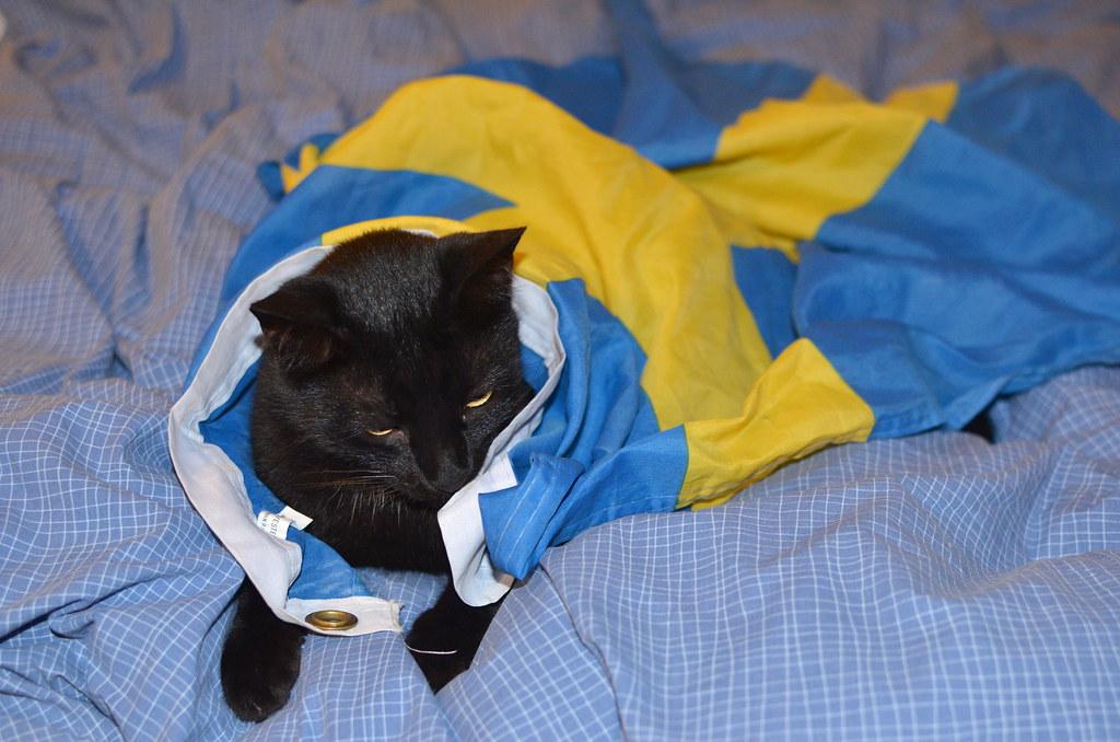 swedish cat pär lindholm flickr