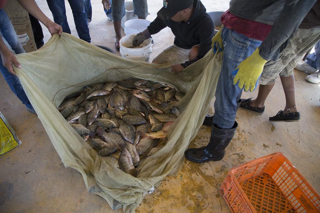 Granja de peces en navarrete video presidencia de la for Granja de peces