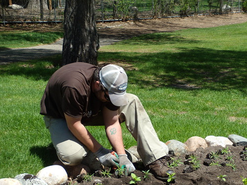 Dylan Planting Annuals, Oakridge May 2013 069 | by Field Outdoor Spaces