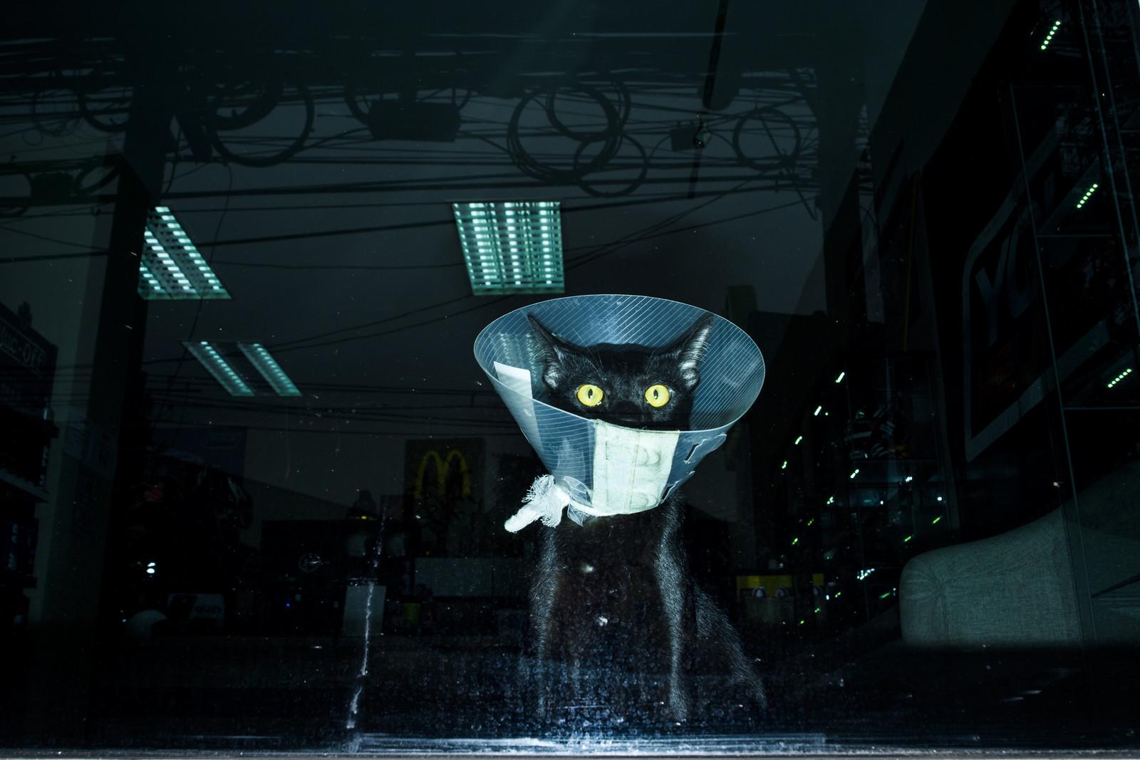 #07 Black Cat | by Tavepong Pratoomwong