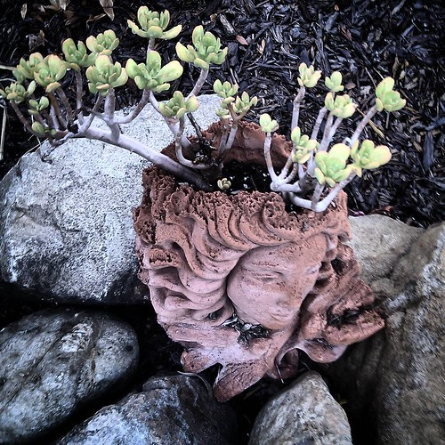 In Dreams #garden #succulent #surreal #walkabout #coolneighbors #clickthing