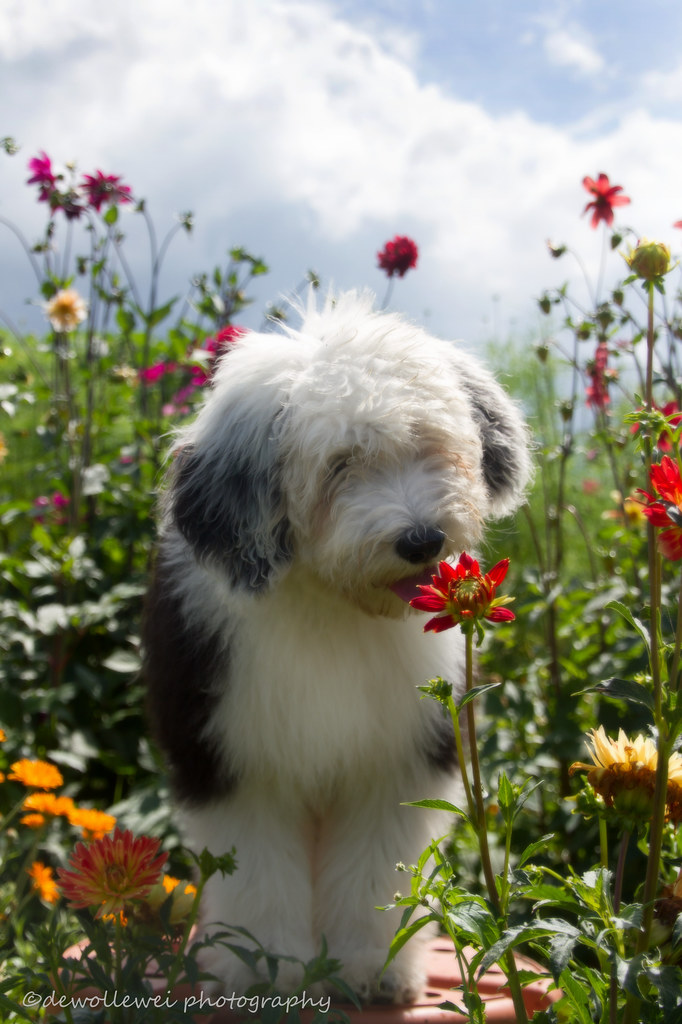 earth laughs in flowers and puppies ralph waldo emers flickr