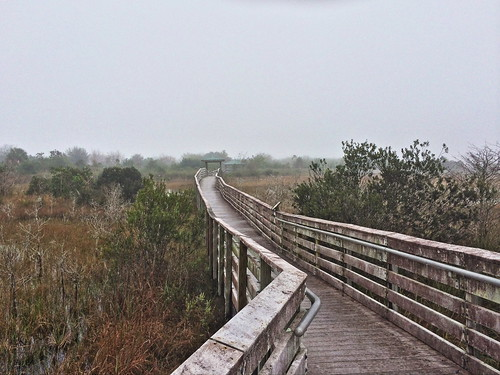 Chapel Trail boardwalk 20140207