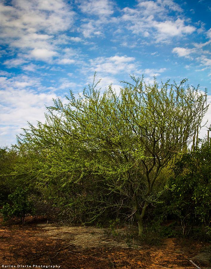 Verde olivo - Brea