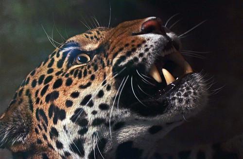 jaguar dortmund img 0070 safi kok flickr. Black Bedroom Furniture Sets. Home Design Ideas