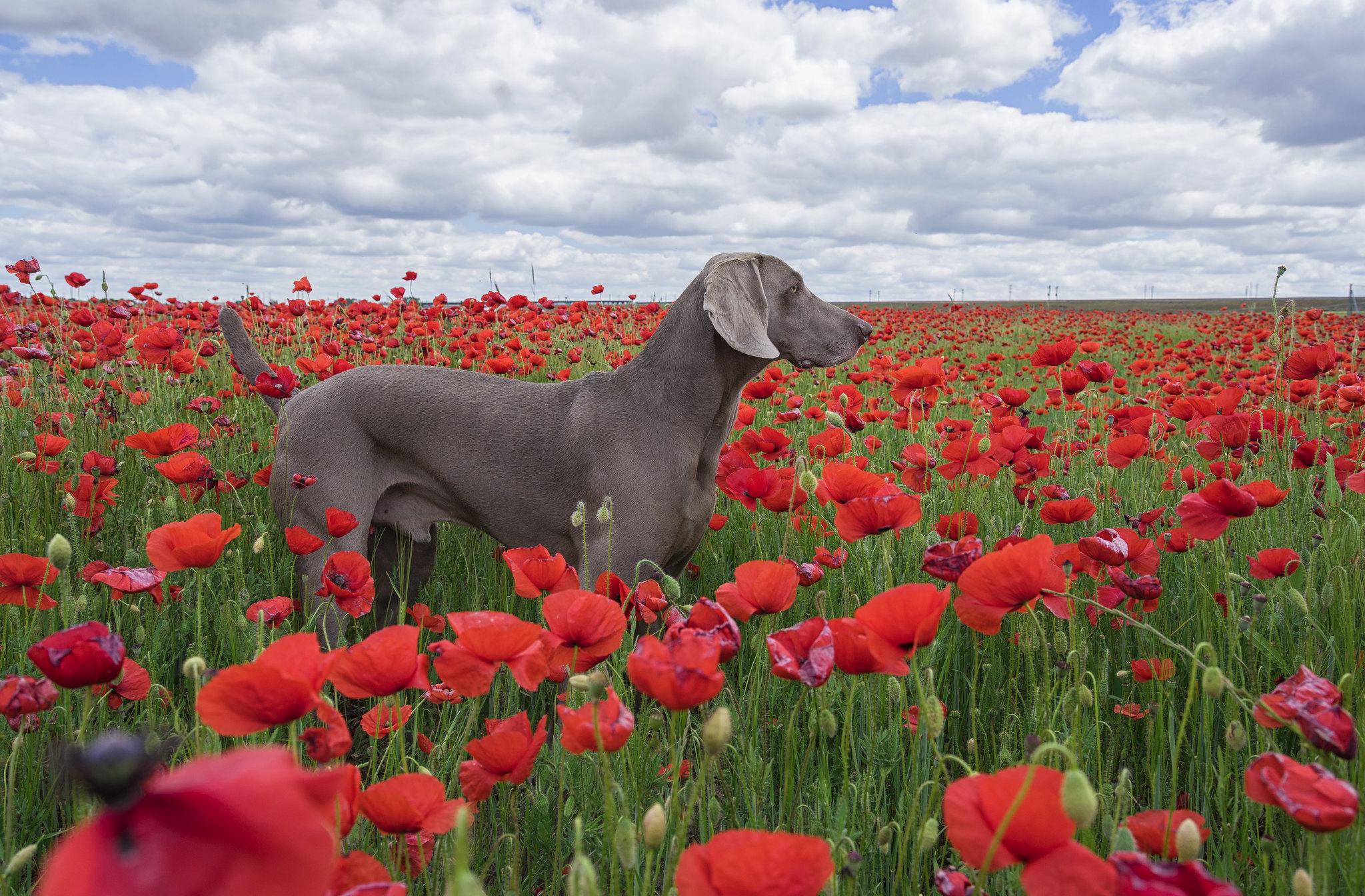 en el cielo en Fauna y flora27322491696_7bbe6b43e2_k
