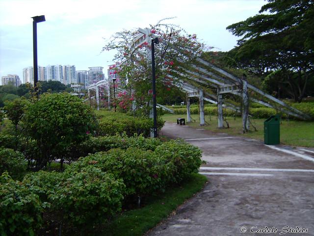 Bougainvillea Garden 01