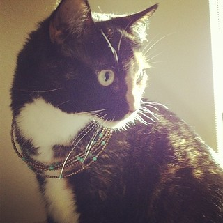 Another necklace-on-cat.  Still not impressed. | by nerdcoop