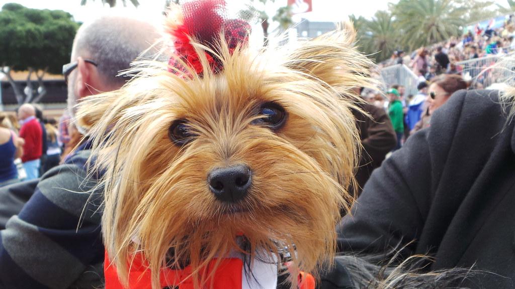 5ª Edición Carnaval Canino 2014 Las Palmas De Gran Canaria Flickr