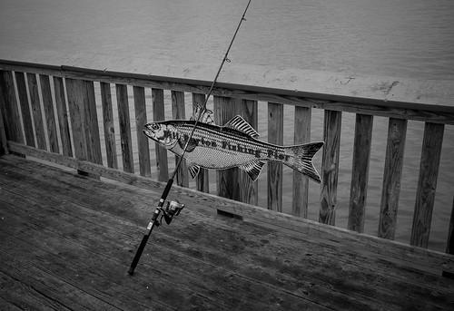 Fishing the bill burton fishing pier named for the for Bill burton fishing pier state park