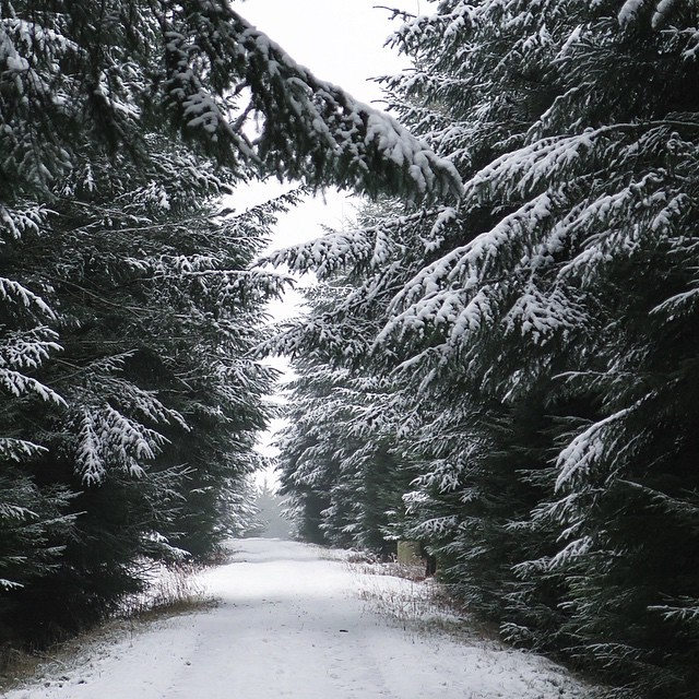 Theshining Or Narnia Winter Woods Landscape Sno