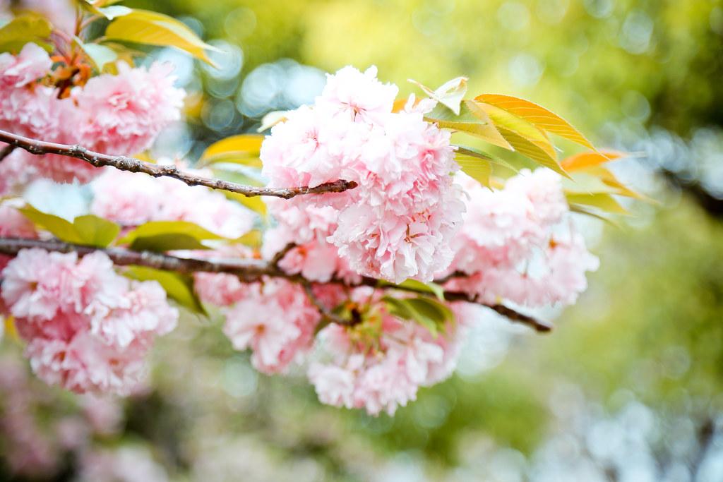 2015 April Kansai 188