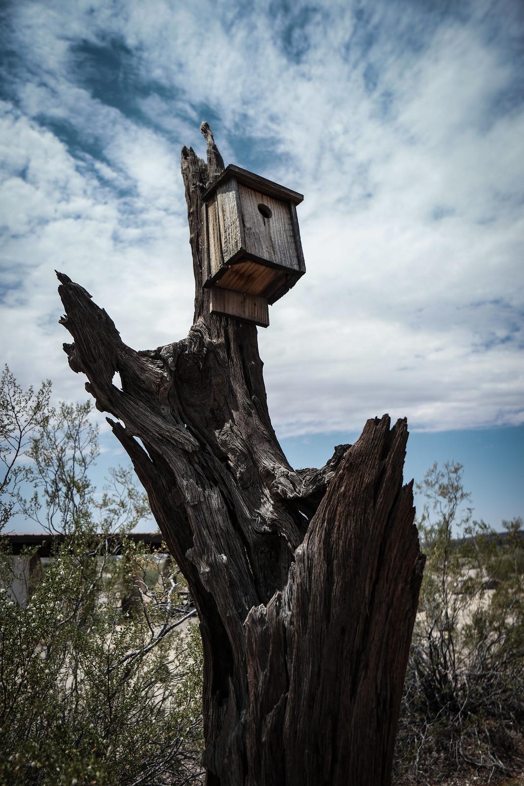 Desert Birdhouse
