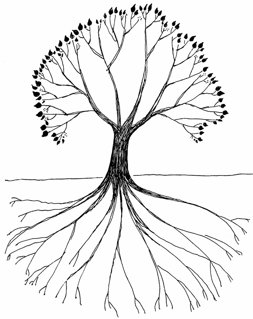 tree with roots drawing baoe tk