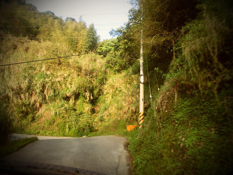 Taiwan Island trips。Couchsurfing。環島景點。南投秘境。忘憂森林。17度C隨拍。  (19)