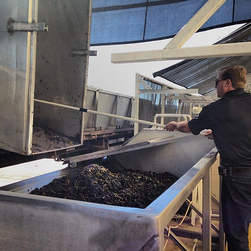 After a brief break, #2013harvest back in full swing. John Jordan helping unload Cabernet grapes into the hopper. | by jordanwinery.com