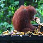 Borneo For Wildlife Enthusiasts: 6 Must-See Destinations