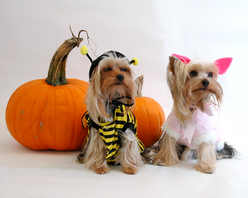 Halloween Puppies Pink Bunny And Yellow Bee Are We Done Y Ben