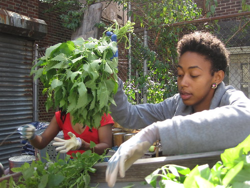 September 2013 Herb Harvest | by Sustainable Flatbush