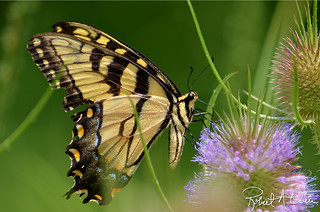 butterfly-kingsport-2013 | by raowen