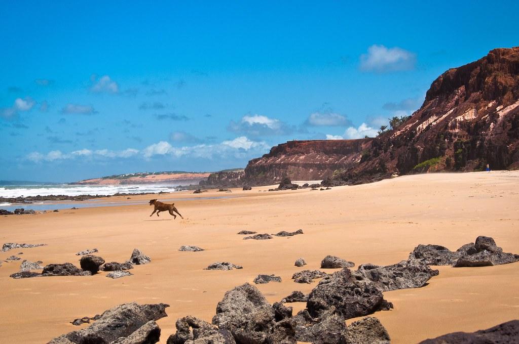 Beach pitbull