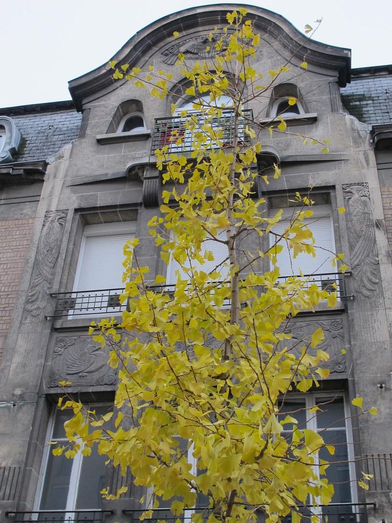 Ginkgo biloba et Art Déco, Reims (51) | Yvette G. | Flickr