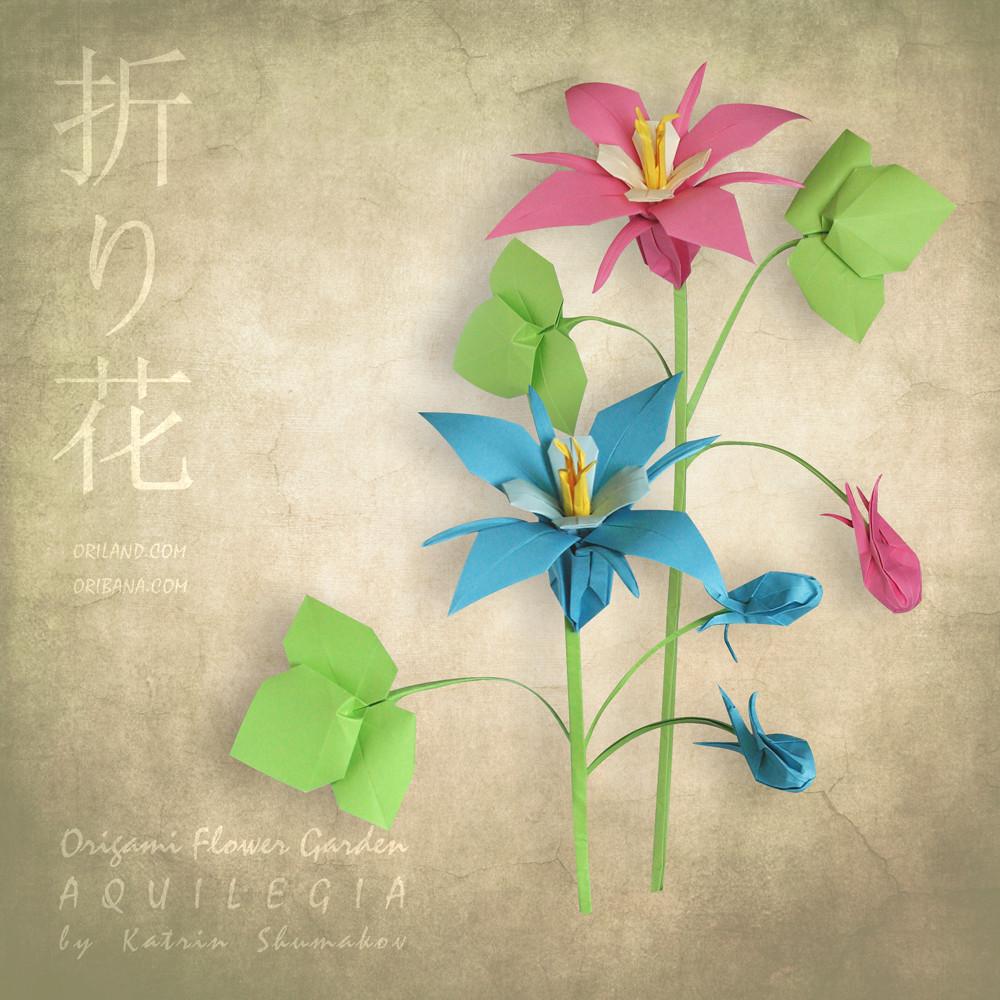 Aquilegia Origami Flower Garden Aquilegia Flower Designed Flickr