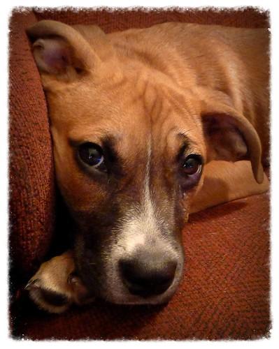 Karma Dog Rescue Halifax