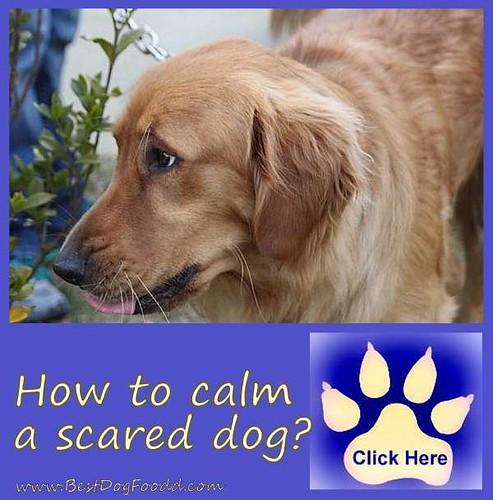 Anxiety Over Dog S Health