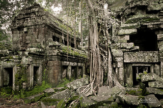 Ta Prohm | by staffan.scherz