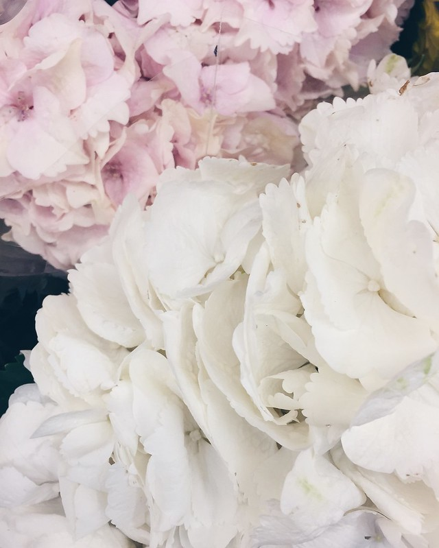 kesä, summer, holiday, loma, summer holiday, kesäloma, kukat, flowers, life, elämä, hydrangea bouquets, hortensia kimppu, pastelli väri, shade, color, pastel, vaaleanpunainen, pinkki, valkoinen, white, sininen, blue, pastel blue, pastel pink, holiday starts, loman alku, honor of, kunniaksi,